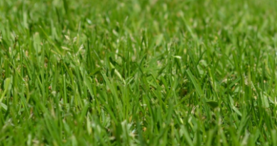 Anlägga ny gräsmatta
